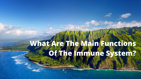 What Are The Main Functions Of The Immune System?